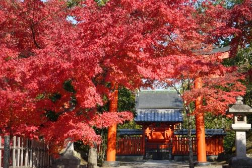 京都デザイン