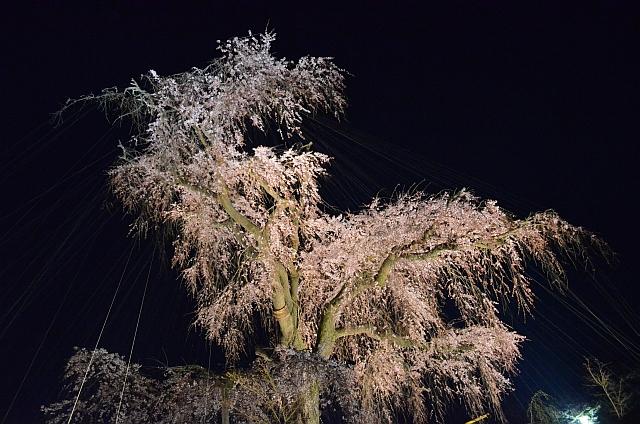 2012_京都_円山公園_夜桜01