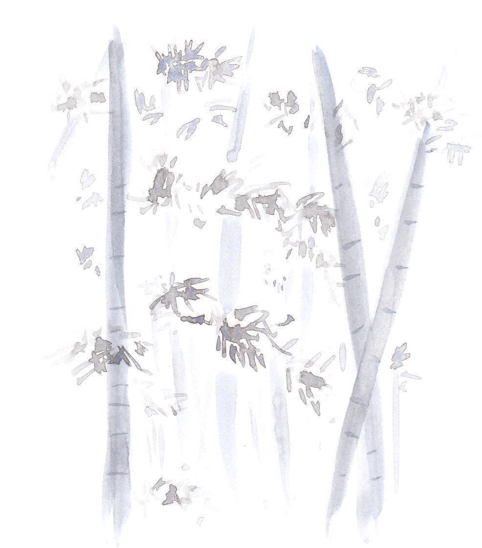 京都デザイン.com|京都観光、京都旅行にどうでしょう?「嵯峨野の竹林」