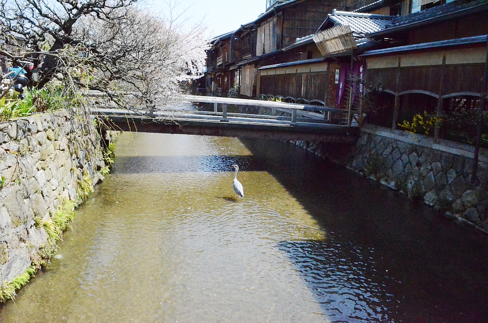 shirakawa-south-street