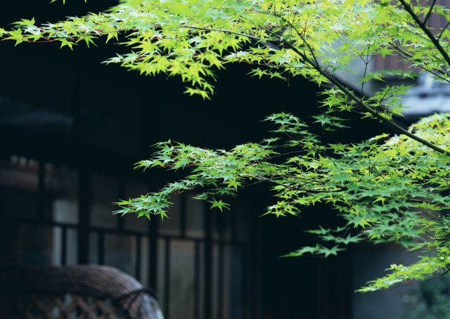 京都旅行、京都観光なら京都デザイン.com