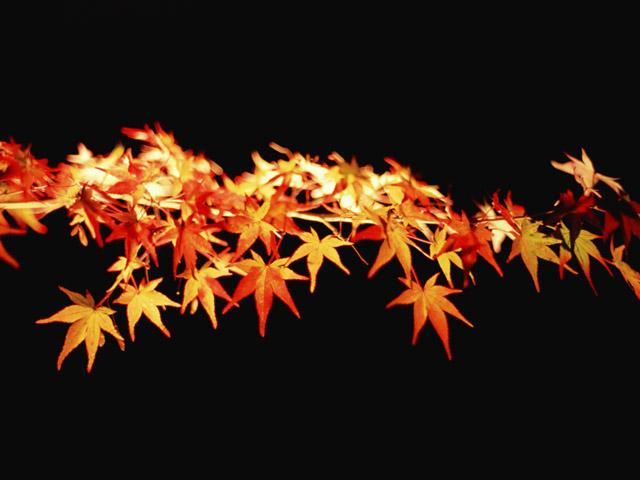 コンセプトは、「KYOTO -愛- 」 「もっと身近な京都」をテーマにした、大人の女性向け情報発信サイト。京都デザイン.com