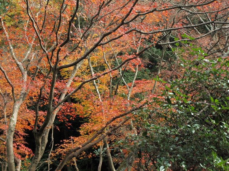 2012年の京都の紅葉プランは練りましたか?「毘沙門堂」の紅葉紹介