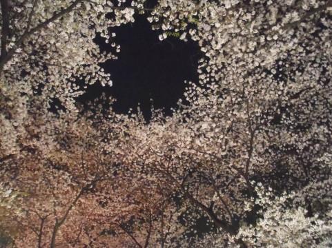 春の特別拝観・ライトアップ