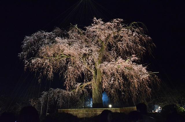 2012_京都_円山公園_夜桜06