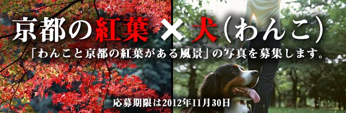 わんこと京都の紅葉がある風景2