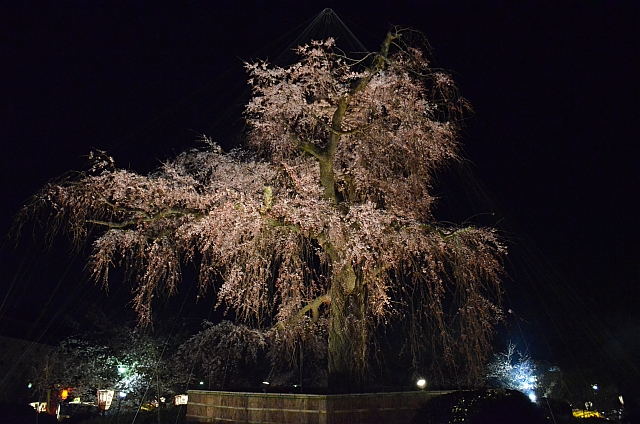 2012_京都_円山公園_夜桜07