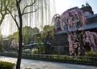 祇園・四条エリア | 京都旅行のオススメ観光スポット