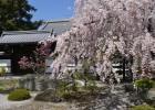 京都旅行に便利 | 京都の年中行事「4月」のイベント・祭り情報