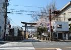 京都の年中行事「5月」~イベント・祭り~ 京都三大祭の葵祭があるよ!